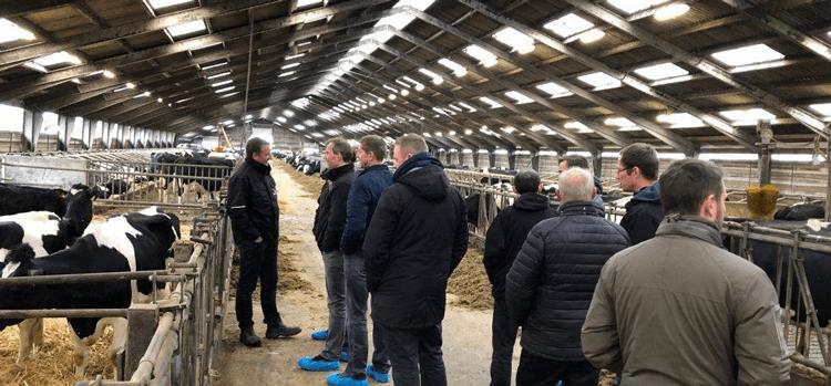 Erfagruppe kvæg